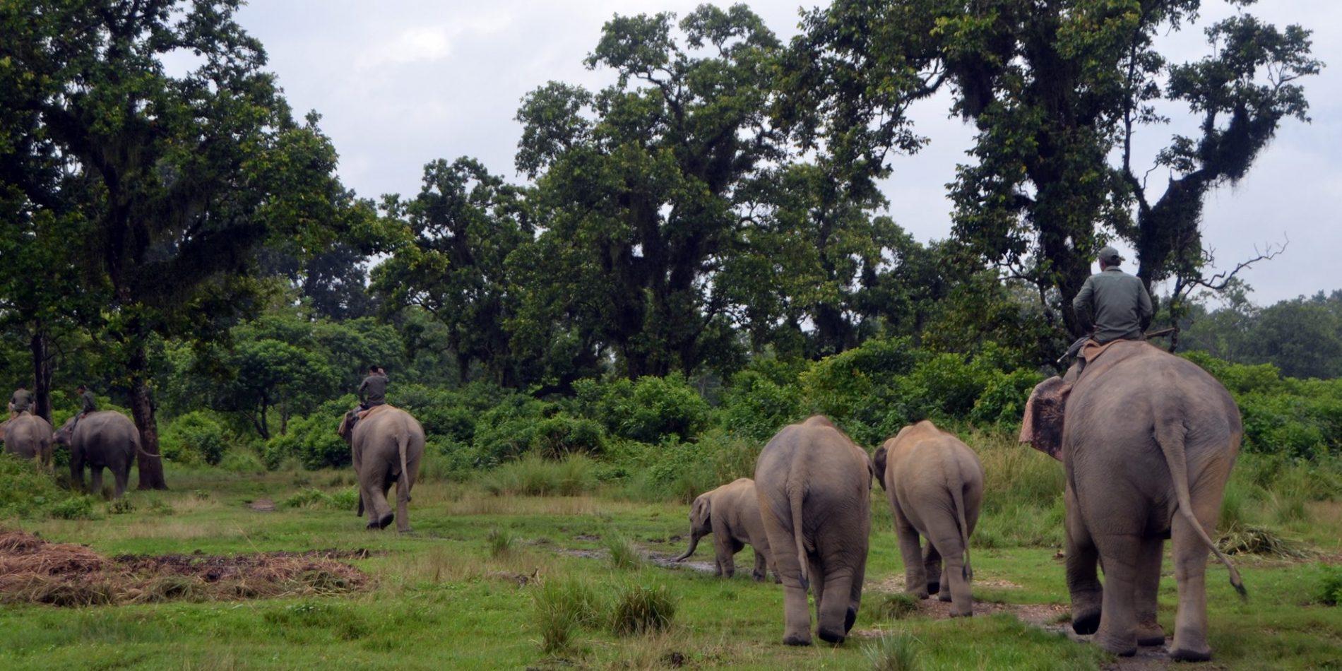 Elephant Breeding Center - Chitwan National Park