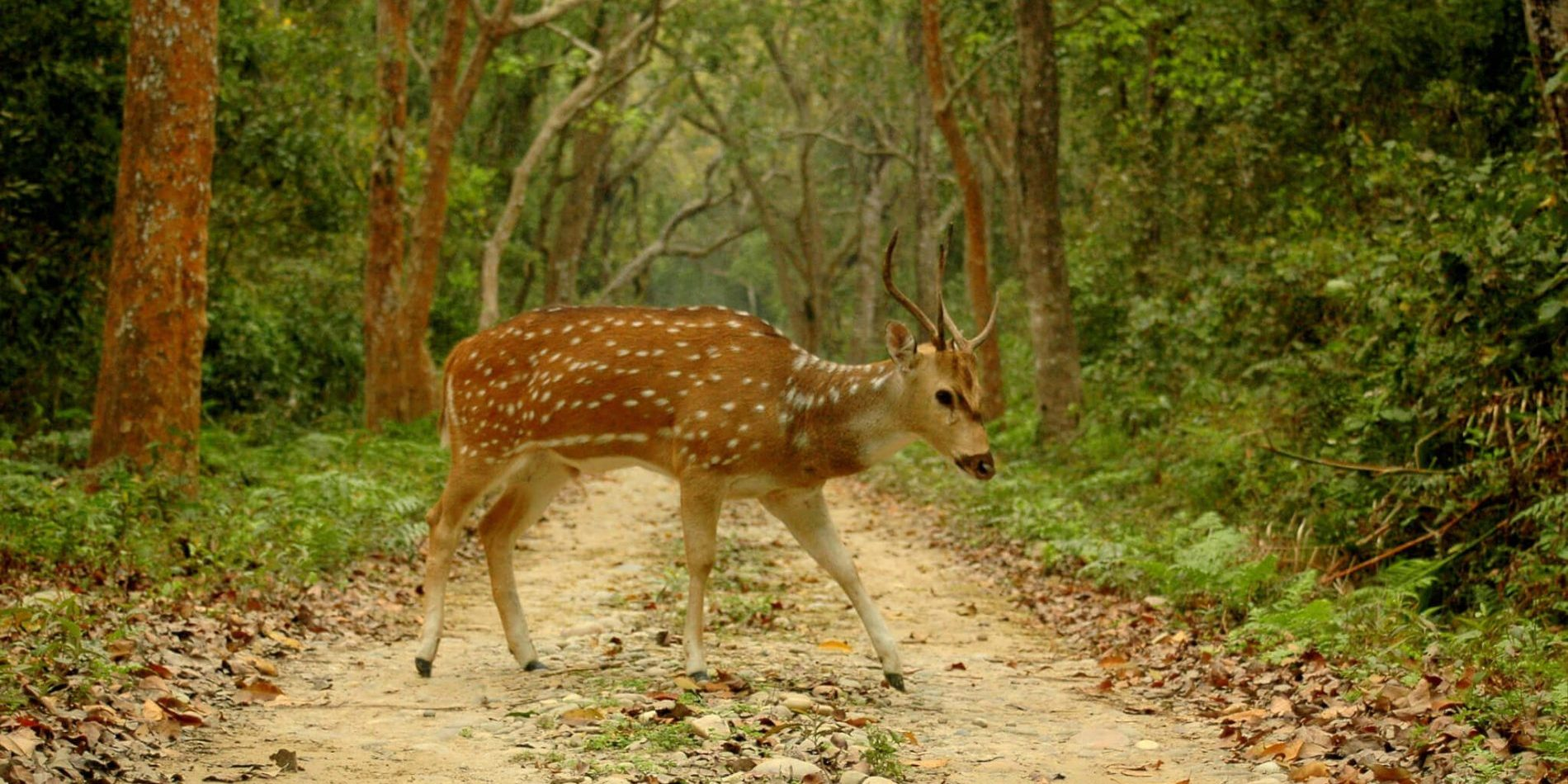 Wildlife in Chitwan National Park