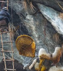 Thrilling Honey Hunting Tour in the high hills cliffs of Nepal